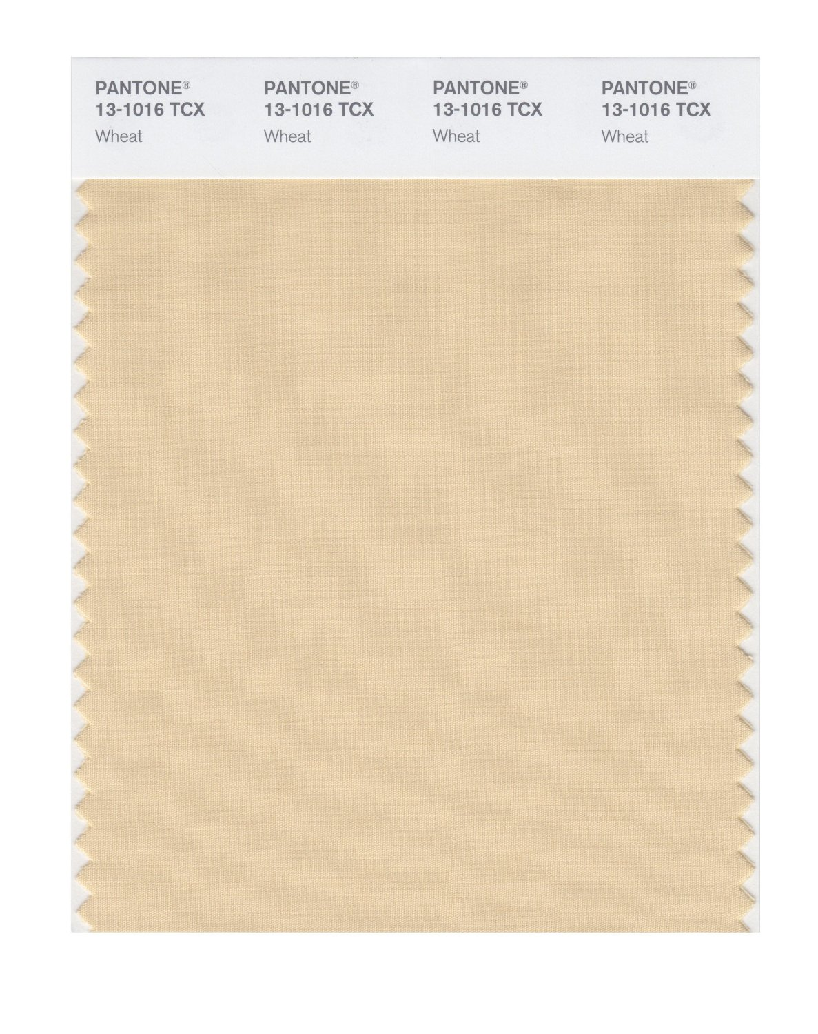 Pantone Smart Swatch 13-1016 Wheat