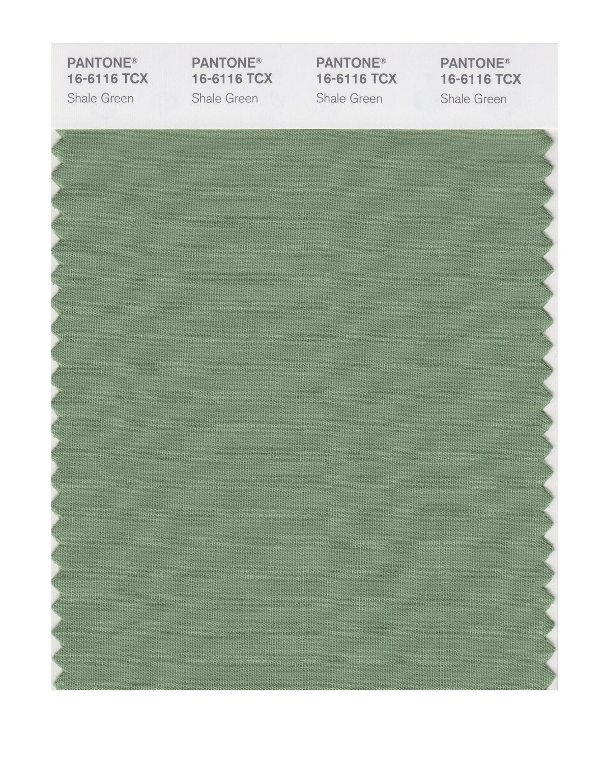 Pantone Smart Swatch 16-6116 Shale Green