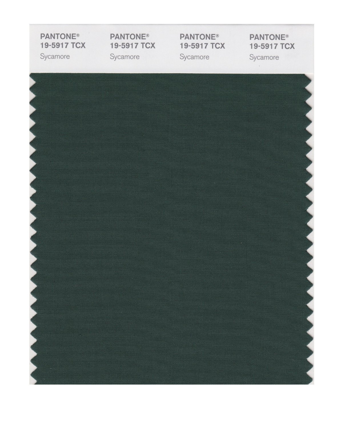 Pantone Smart Swatch 19-5917 Sycamore
