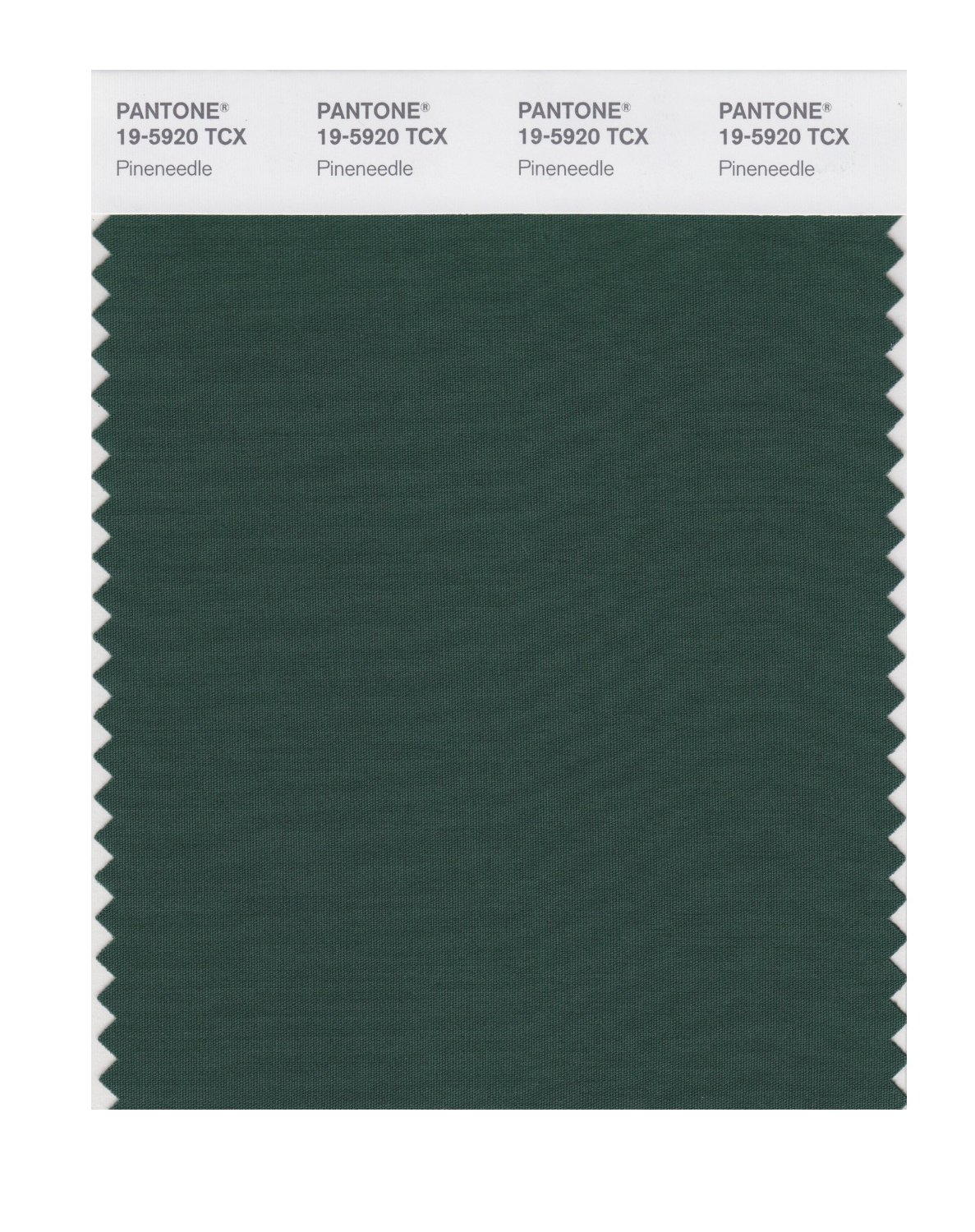 Pantone Smart Swatch 19-5920 Pineneedle
