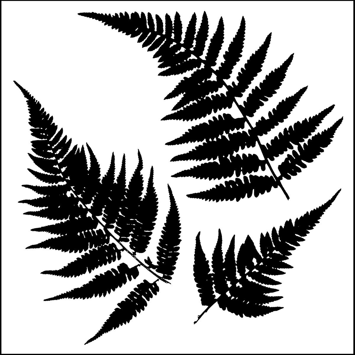 Stencil 6in x 6in Ferns