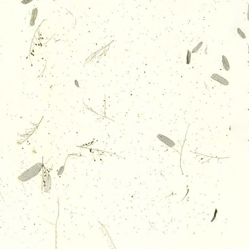 Paper Tamarind Leaves White/Green 25X37