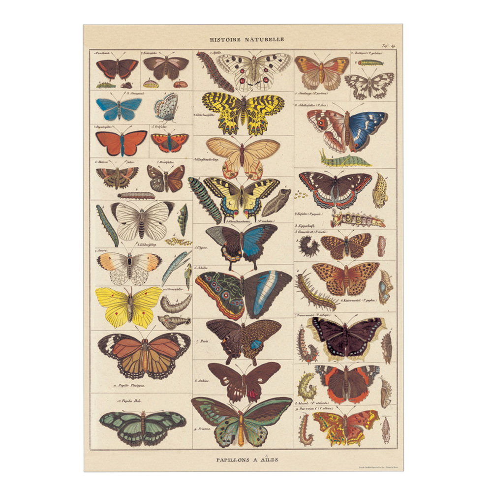 Decorative Wrap 20X28 Nat History Butterflies