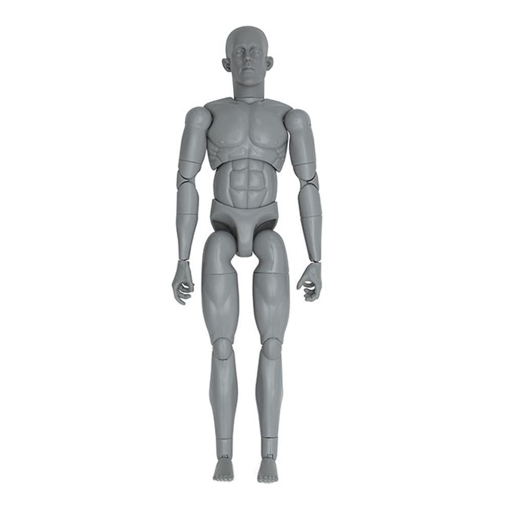 Art S. Buck Anatomical Manikin Male