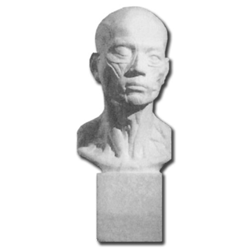 Plaster Cast Anatomical Head