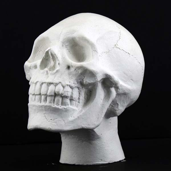 Plaster Case Mini Skull